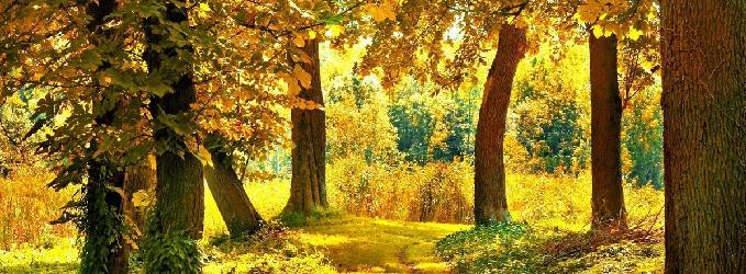 Это всё осень