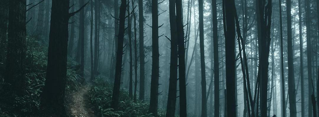 «Таинсвенный лес»