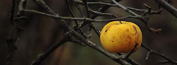 Я напишу про запах спелых яблок - осень
