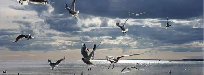 Кто за птицами наблюдает...