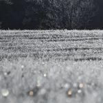 Бриллиантовые капли первого мороза