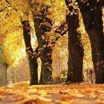 Как ни жаль, но осень наступает...