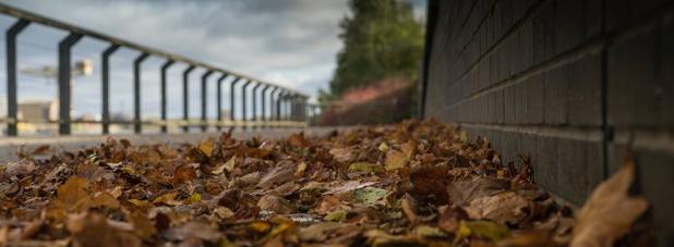 На седьмом километре листья…