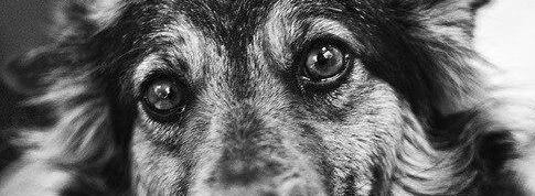 Мать - собака, о жизни, смысл жизни, верность