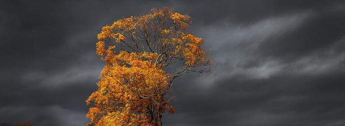 Осеннее депресеннее