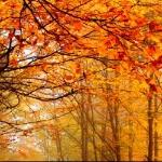 Эстетствует октябрь