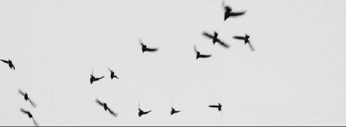 Птицы с фронта молчат