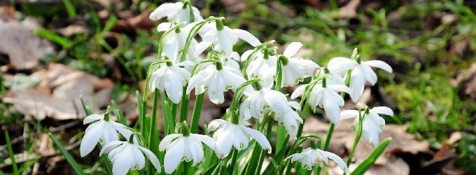 Приди, молю, кудесница Весна...