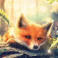 Мечтательная лиса