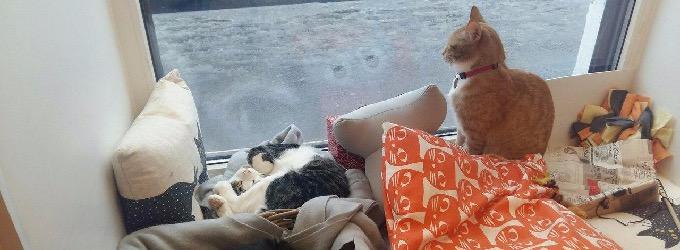 Котята из приюта