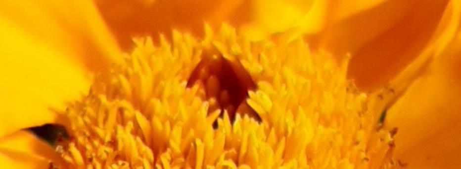 Осенний маскарад