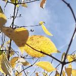 Осень - чаровница !