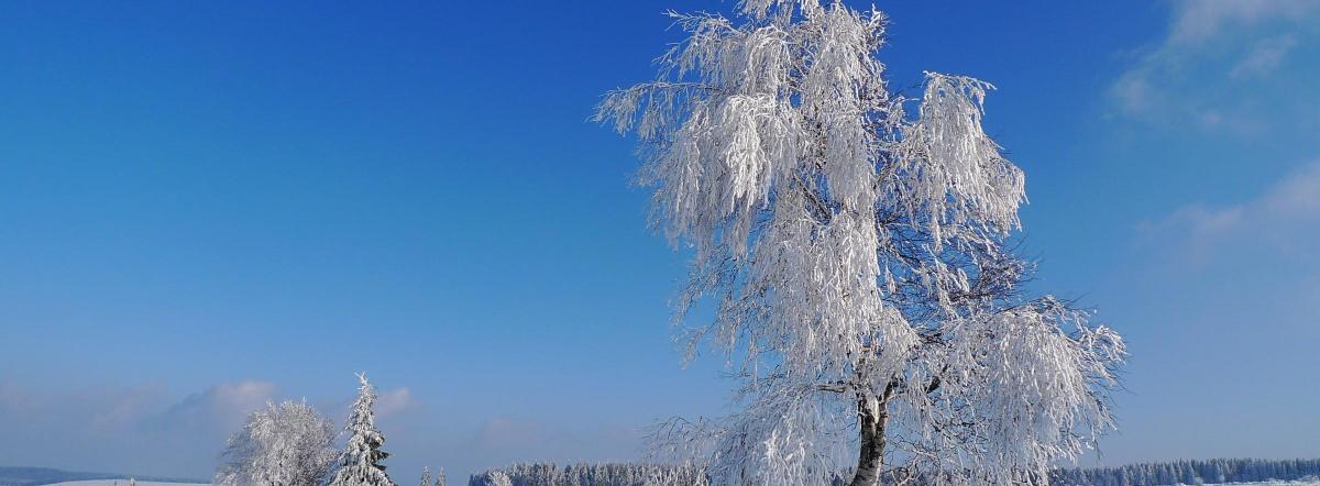 Белая береза под моим окном - есенин, стихи есенина