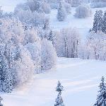 Поёт зима, аукает