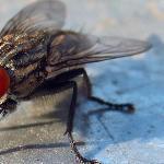 I heard a Fly buzz - when I died