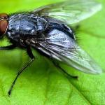 I heard a fly buzz when I died