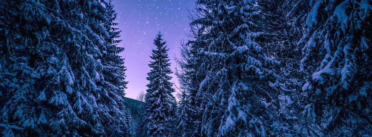 Stopping By Woods On A Snowy Evening - stopping, woods