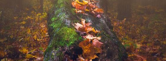 Дриада - о жизни, дерево, мифология, осень