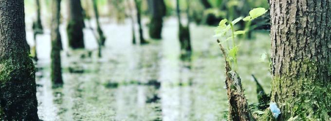 В жилах моих зеленеет вода