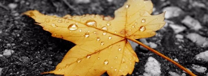 Чёрная осень