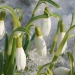 Весна приходит очень странно...