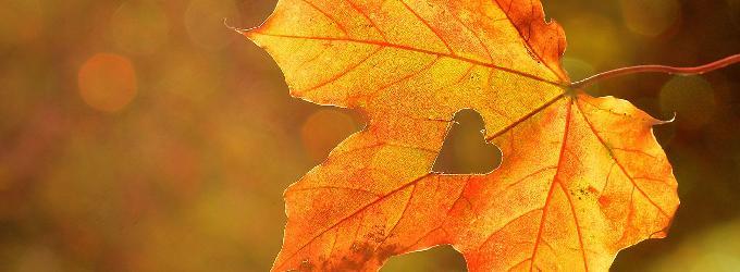 Перед осенью
