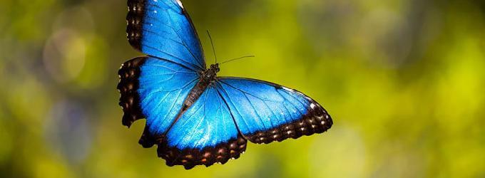 Синяя бабочка