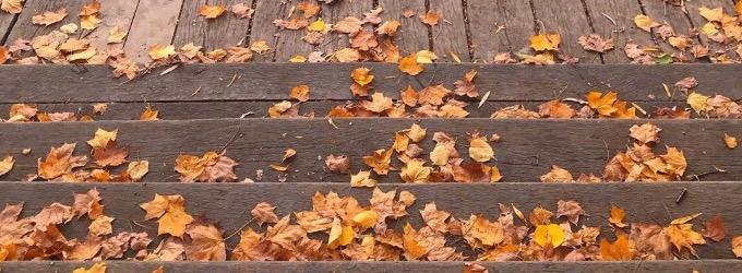Жёлтые листья - сокровища Нибелунгов...
