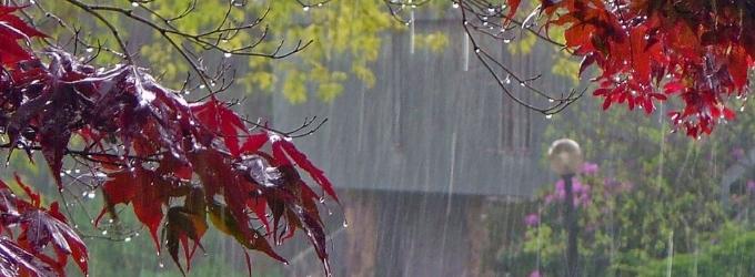 Мы говорим на языке дождя