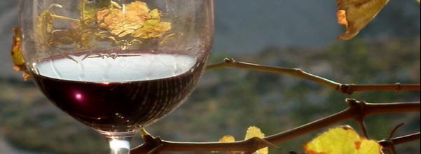 Истинное вино