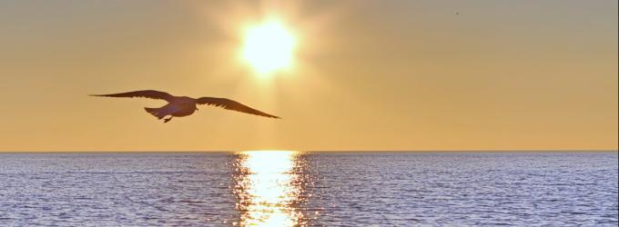 Полёт долгой Жизни - философия,лето,позитив,жизнь,поздравления