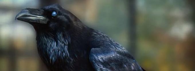Предчувствие ворона - холод,мрак,безнадежность,ворон,смерть