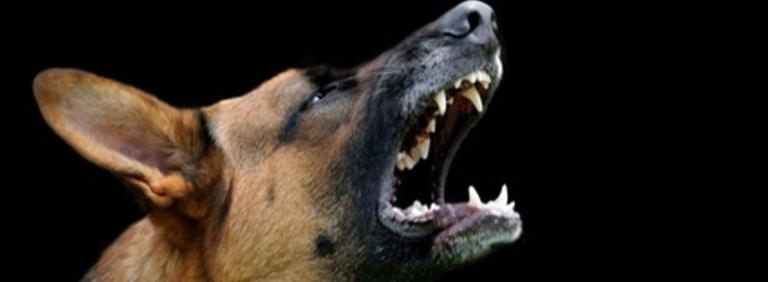 Собачья страсть
