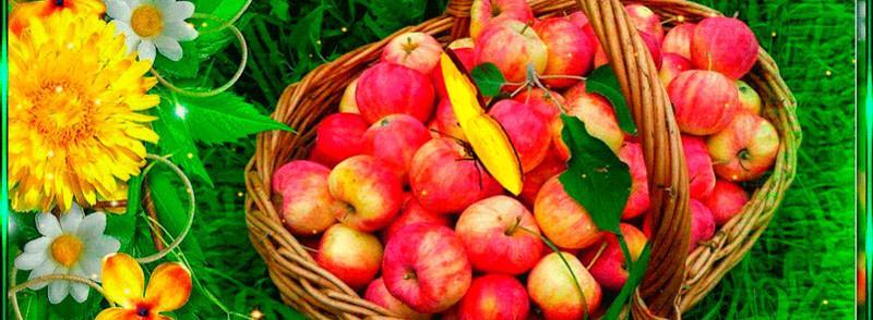 Обилие яблок