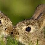 Дед Мазай и зайцы краткое содержание
