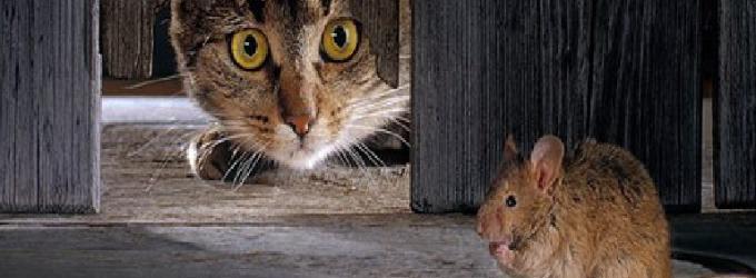 Хозяйка, кот и мыши