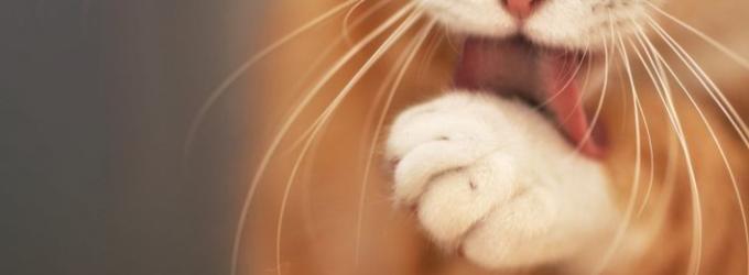 Басня про кота