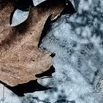 Осень устала ждать