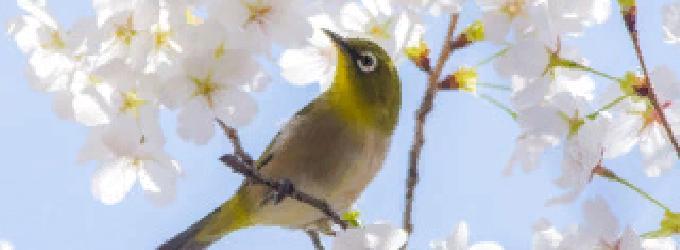 Весна есть всегда ожидание чуда - пейзажнаялирика