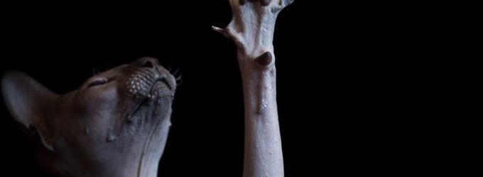 «Смертный приговор кота» - смерть, лирика, жизнь, животные