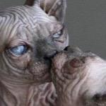 «Поэтов нет среди котов»