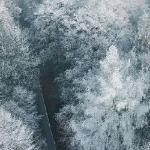 Снег принёс тишину с небес