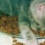 Почему мяучит кошка?