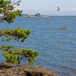 На Финском заливе