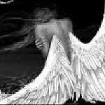 Перо ангела