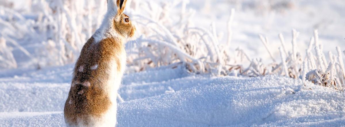 Заяц - сказка