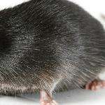 Маша и мышки