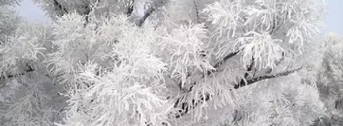 Вечный цикл - зима