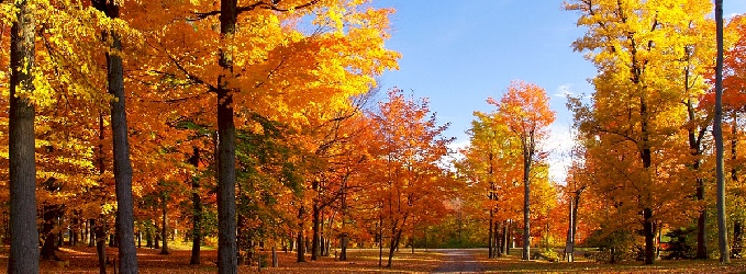 Осень 🌜🌛