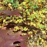 Осень в октябре